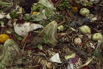 Kompoststillleben