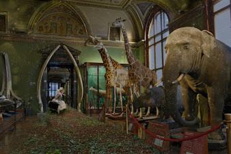 naturhististorisches Museum Wien