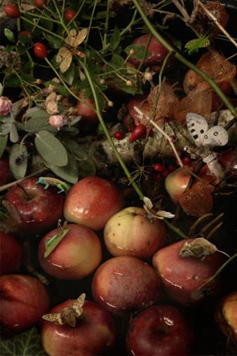 schwimmende Äpfel